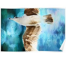 Seagull on Blue Poster