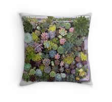 Succulent garden desplays Throw Pillow