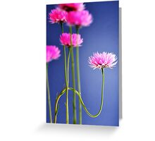 reformed daisy Greeting Card