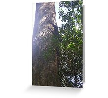 Goanna up a tree Greeting Card