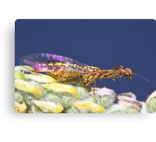 Mantis-fly wing reflection Canvas Print