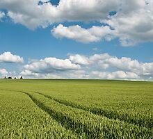Wheat Fields by Alexander  Mieszkowski