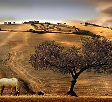 Rural Spain View by Mal Bray