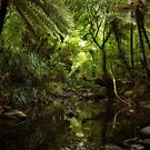 NZ Native Forest Stream by Dean Mullin