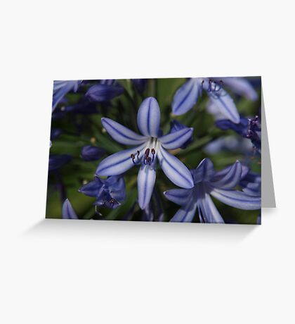 Bush Flowers Greeting Card