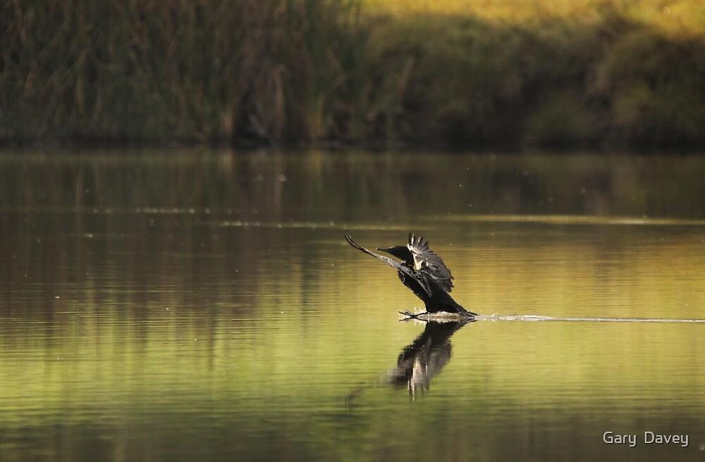 On Golden Pond by Gary  Davey (Jordy)