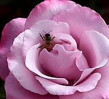 I am Pretty in Pink by TeAnne
