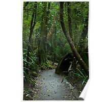 Walkway at Best of All Lookout - Springbrook N.P Poster