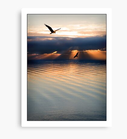 Ospreys Hunt Through a  Floridian Sunset Canvas Print