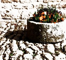 Cobblestones and Flowers by GlennB