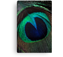 Just a feather. Canvas Print