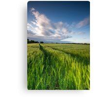 The Wind That Shakes the Barley  II Canvas Print