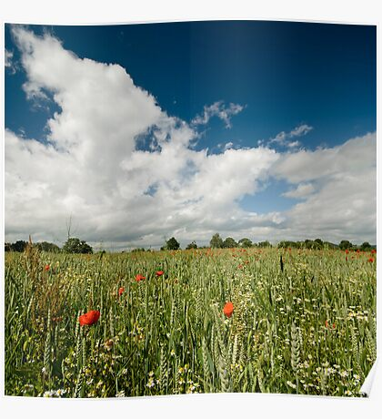 Poppy Fields - Herefordshire UK Poster
