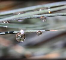 Dew Drop by tracyleephoto