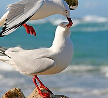 Seagull Kiss by Troy Curry