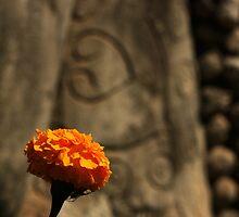 BhuddaPark by John Marx