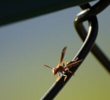 Hornet on Chain link fence Sticker