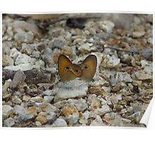 Orange Ringlet Butterflies Poster