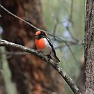 Robin The Red-Breast by Rick Playle