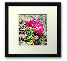 Fuscia Pink Cactus Flower Bloom Framed Print