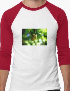 From little acorns grow mighty oaks Men's Baseball ¾ T-Shirt