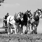 Working Horses by gary A. trounson