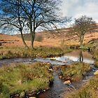 North York Moors by Rachel Slater