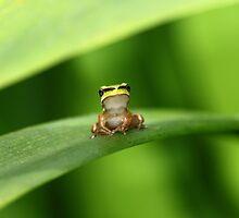 Watcha Looking At? by Ann  Van Breemen