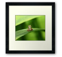 Watcha Looking At? Framed Print