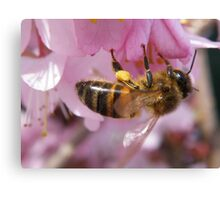 Pollen collector Canvas Print