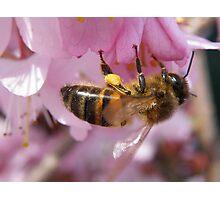 Pollen collector Photographic Print