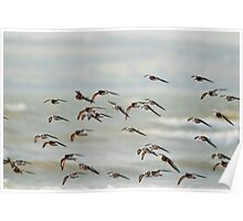 fly past at Duncannon Beach, County Wexford, Ireland Poster