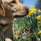 Sadie Loves Spring by Jennifer Potter