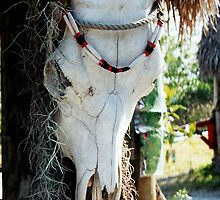 Southwest Cow Skull Everglades National park Florida western art  by Rick Short