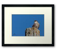 Roadside Merlin Framed Print