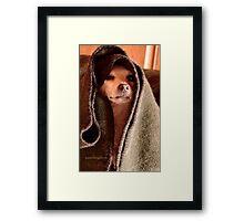 Master Obi-Wan Kenobi Chihuahua  Framed Print