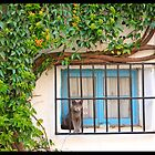 Curious cat on the window by Miro Slav