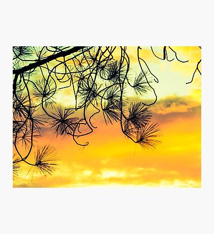 Beautiful view Photographic Print