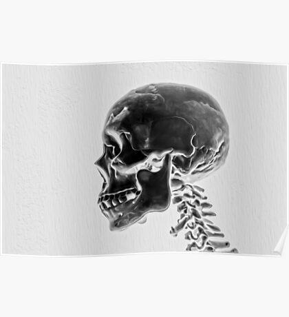 X-Ray Skull Poster