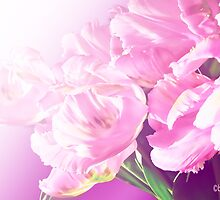 pink tulips by aquaarte