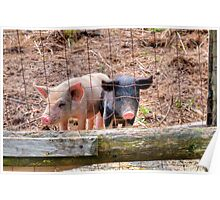 And, These Two Lil Piggies.... Poster