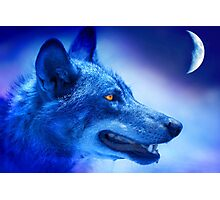Alpha Wolf Photographic Print