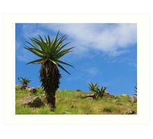 Aloe, standing tall Art Print