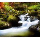 Fall Steps - Autumn on the River Aber by Mal Bray