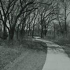 Trees And A Sidewalk by Jeffery W. Turner