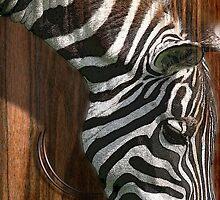 the zebra by arteology