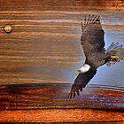 eagle by arteology