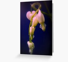 white bleeding hearts, blue, red tint Greeting Card