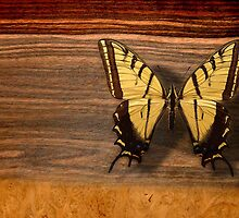 butterfly by arteology