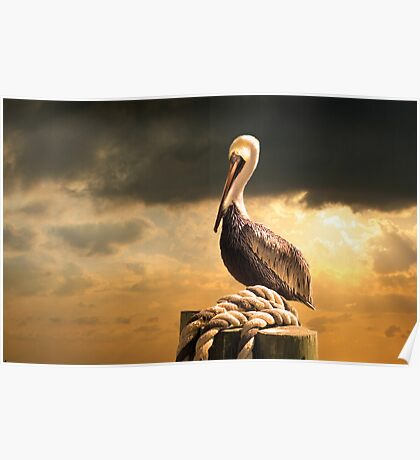 A Pelican after a Floridian Storm Poster